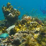 Montserrat-Reef-by-Frank-hobbs