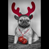 ALL-I-WANT-FOR-CHRISTMAS-IS-A-BIG-RED-NOSE-by-Roxanne-Bunn