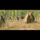 TERMITE-MOUNDS-by-Jim-Murdock