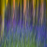 BLUEBELL-WOOD-SUNSET-by-Jackie-Sellers-1