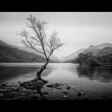 THE-LONE-TREE-by-Ashbourne