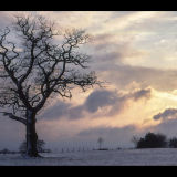 WINTRY-TREE-by-Stoke