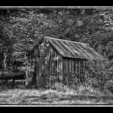 BIJOU-WOODLAND-TIN-SHED-by-Glyn-Bass