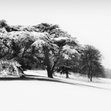 CEDARS-IN-THE-SNOW-by-John-Heppell
