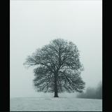SOLITARY-TREE-by-Gemma-Harvey