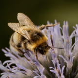 BEE-POLLINATING-by-John-Riddy