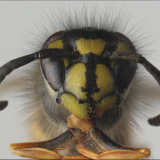 WASPISH-by-Mike-Lewis