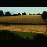 AGRICULTURAL-PATTERNS-by-John-Stubbs