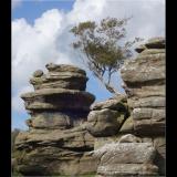LONE-TREE-BRIMHAM-ROCKS-by-Wendy-Beasley