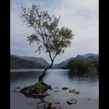 LONE-TREE-by-John-Riddy