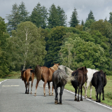 NEW-FOREST-ROAD-BLOCK-by-Sue-Keeling