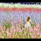 SUMMER-FLOWERS-by-Taryna-Herbert