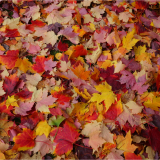 THERES-AN-ODD-ONE-OUT-AMONGST-THESE-AMAZING-AUTUMN-COLOURS-by-Wendy-Beasley