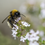 BUSY-BEE-by-Lisa-Travers