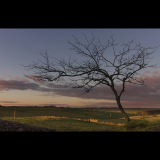 LONE-TREE-AT-DAWN-by-John-Riddy