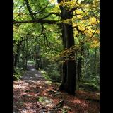 WOODLAND-WALK-by-Hugh-Stevenson