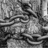 NATURE-IN-CHAINS-by-John-Heppell