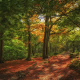 DAPPLED-LIGHT-by-Jackie-Sellers-1