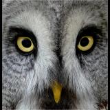 OWL-by-Wendy-Beasley