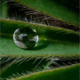 RAINDROP-by-Lisa-Travers