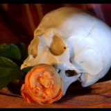 DEAD-HEADER-by-Taryna-Herbert