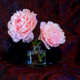 PEONIES-by-Ken-Smith