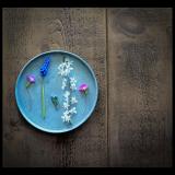 SPRING-FLOWERS-by-Jenny-Neale