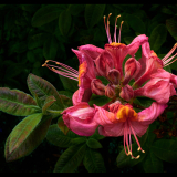 STAMENS-by-David-Monkhouse