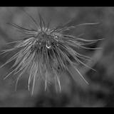 FLOWERHEAD-by-Taryna-Herbert