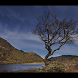 THE-LONE-TREE-by-John-Riddy